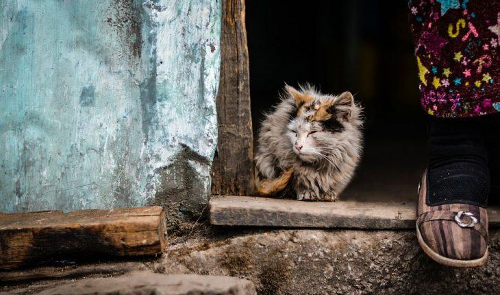 Mačka odbija hranu i vodu, neće da jede – Uzroci