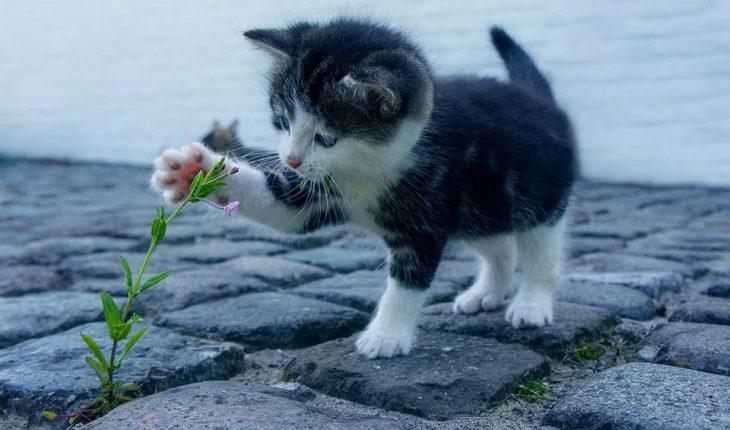 Kako dresirati i vaspitati mačku?
