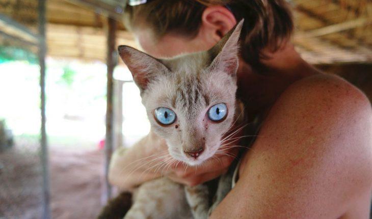 Najčešće bolesti mačaka – simptomi i lečenje