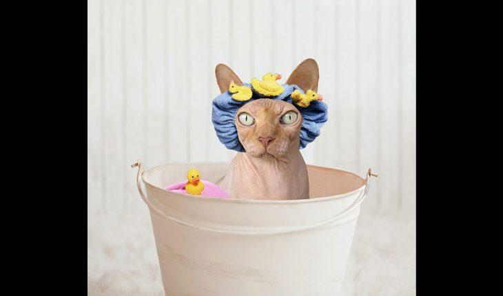 Kupanje mačke – kako okupati mačku?