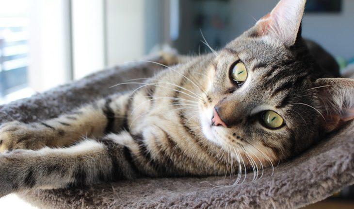 Zašto mačke predu? Odgovor će vas iznenaditi!