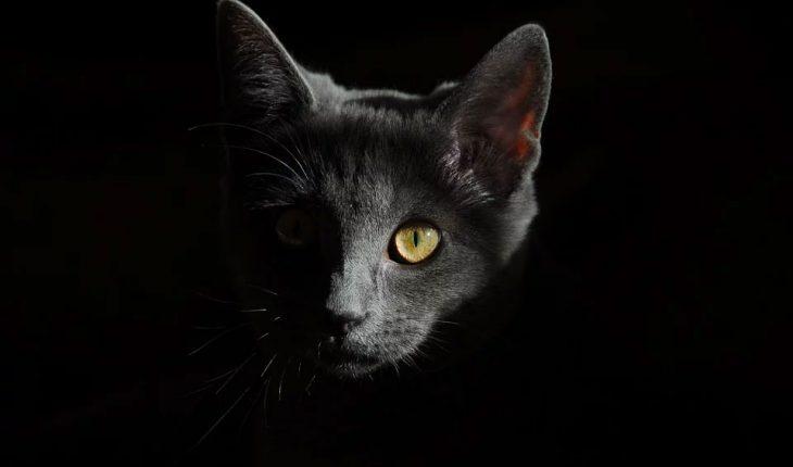 Koliko dugo mačke žive? Evo koliki je životni vek mačaka!
