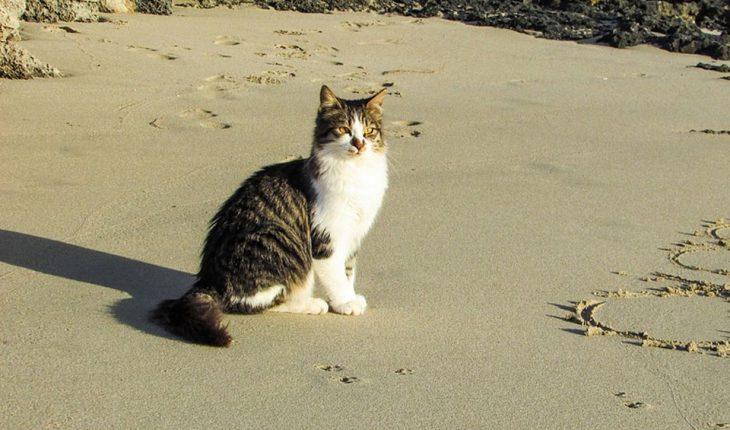 Posip, pesak za mačke – upotreba, vrste, saveti i cena