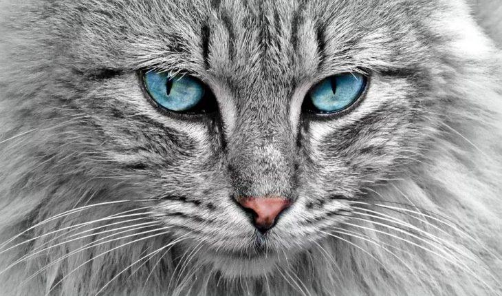 Najlepša imena za mačke – ženska i muška