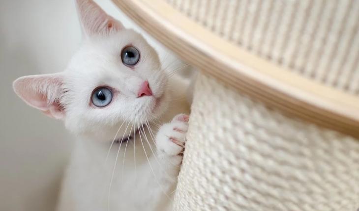 Grebalica za mačke – uradi sam, vodič za odabir, saveti i cena