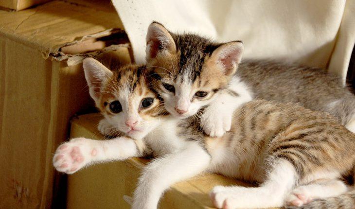 Kućica za mačke – uradi sam, vodič za odabir, saveti i cena