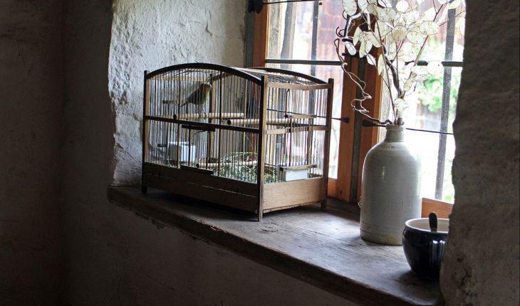 Kavezi za ptice – uradi sam, vodič za odabir, saveti i cena