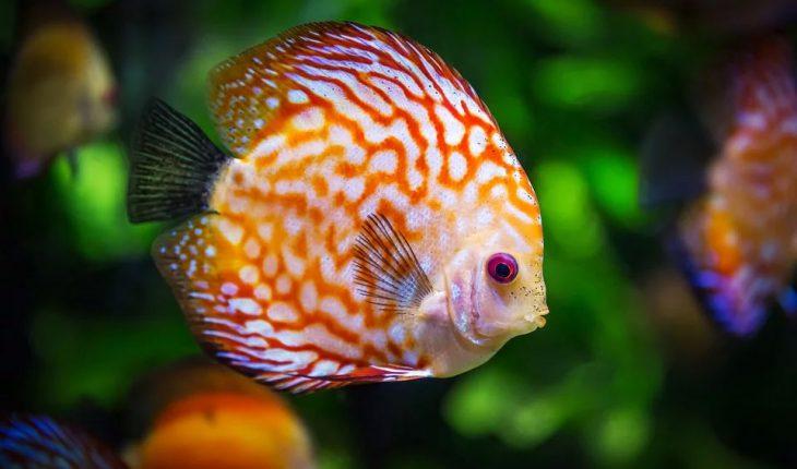 Imena za ribice – ideje