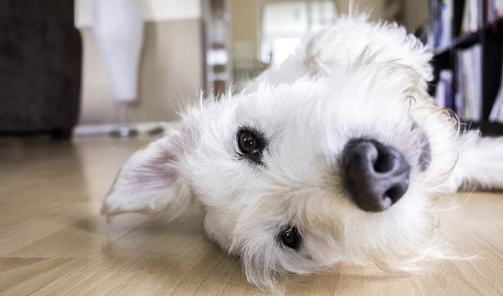 Psi za stan bez mirisa