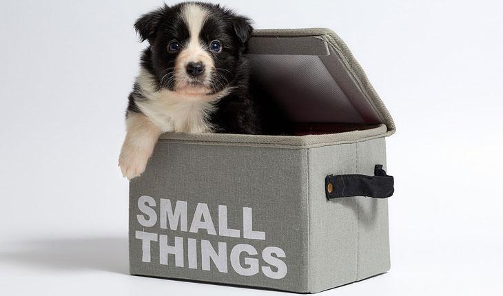 Najpogodnije rase pasa za držanje u stanu