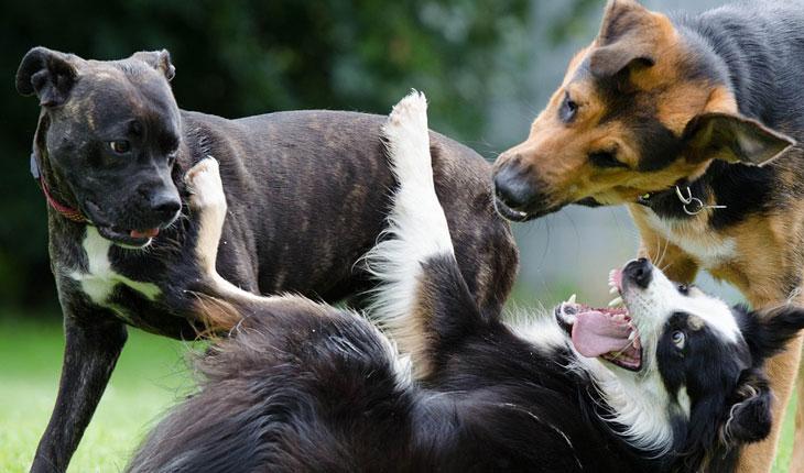Najveće rase pasa