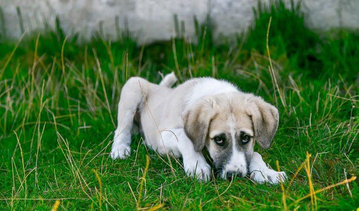 Najčešće bolesti pasa – simptomi i lečenje