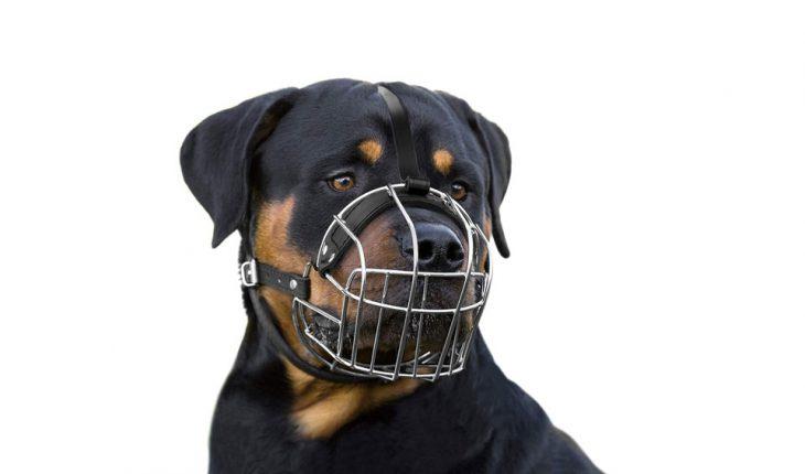 Korpa za pse – uradi sam, vodič za odabir, saveti i cena