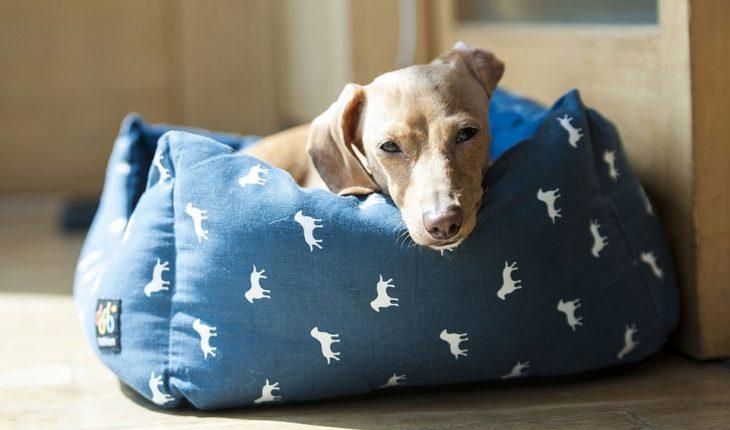 Jastuci i kreveti za pse – uradi sam, vodič za odabir, saveti i cena