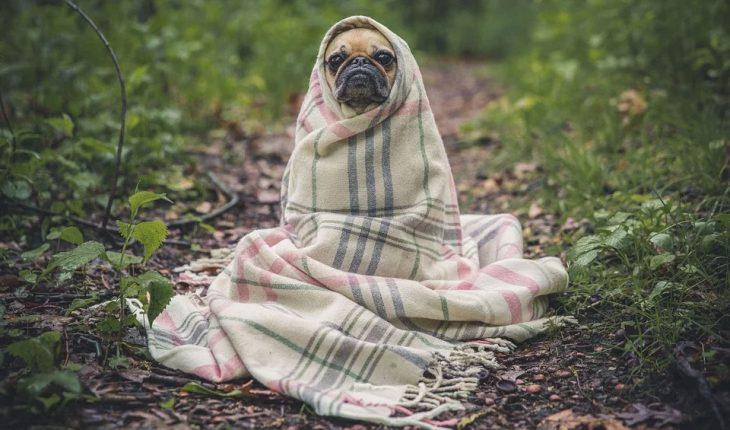 Parvovirus kod pasa – uzrok, simptomi i lečenje