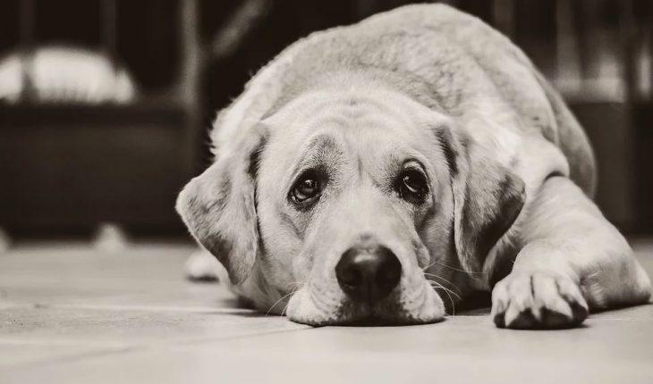 Povraćanje i proliv kod pasa – simptomi, uzrok i lečenje