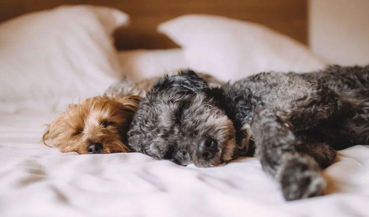 Pas se trese – zašto se trese i šta uraditi?