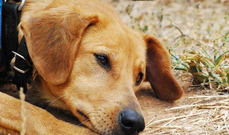 Gliste kod pasa – simptomi, uzrok i lečenje