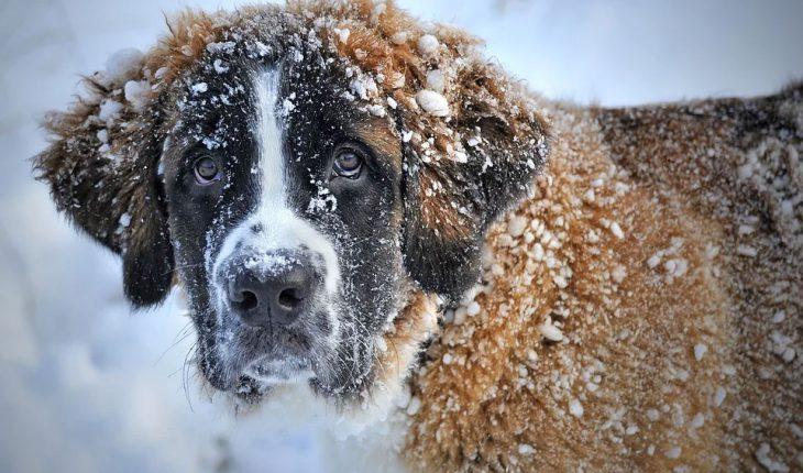Prehlada kod pasa – simptomi i lečenje