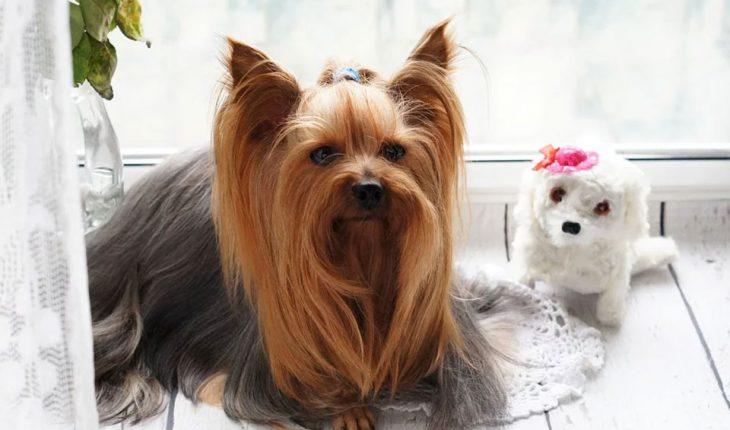 Furminator i trimer za pse – upotreba, iskustva i cene