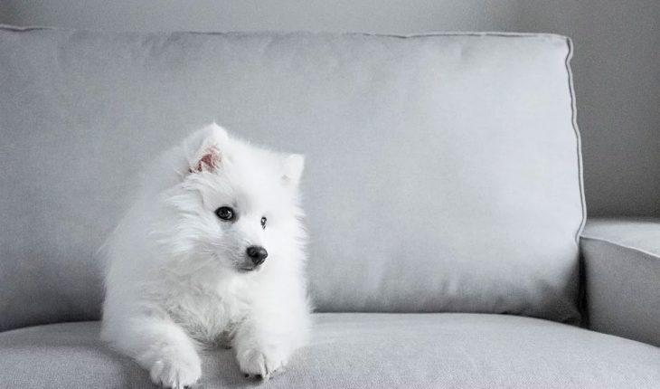 Najlepša imena za pse – ženska i muška