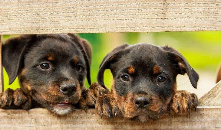 Vakcinacija pasa i štenaca