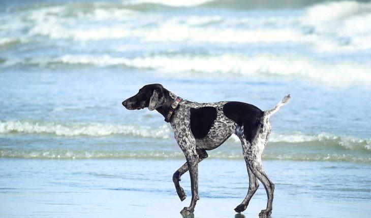 Vitamini za pse – za imunitet, dlaku, kosti